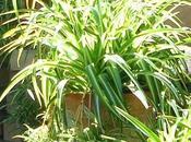 plantas, filtro aire natural gratuito.