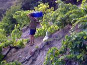 Proyecto Envínate: Vinos autor, terruño,… paisaje.