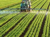 ¿Qué herbicida Roundup?