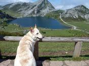 Senderismo: Asturias Lagos Covadonga