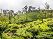 Kandy, Haputale Ella, Lanka montañosa