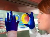 Descubren Nuevo Antibiotico