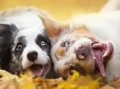 ¿Llevas Perro Vivir Contigo?, ¡Mira Esto!