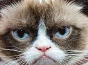 Conoce mejor Grumpy