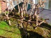 Diorama Acers Campestres montando bosque