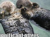 Mitos hechos sobre nutrias marinas