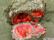 piedra sangrante