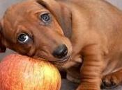 maneras vinagre manzana puede ayudar perro