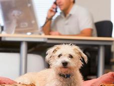 llevas perro trabajo serás productivo