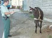 Mejor multar ayudar, Guardia Civil vuelve hacer
