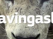 marca prótesis dentales devuelve dentadura león #savingaslan