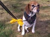 Sabes significa lazo amarillo collar correa perro