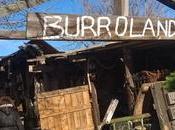 mañana domingo Burrolandia