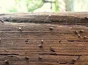 Consejos para eliminar plaga termitas