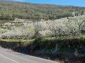 Comarca Vera Valle Jerte. Roadtrip moto entre cerezos.