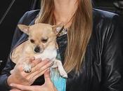 Paris Hilton, destrozada muerte perrita