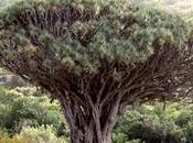 Islas Canarias Escapada semana. Tenerife Visita Orotava, Icod Vinos Laguna (Patrimonio Humanidad)