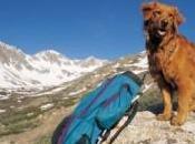 ¿Las mascotas deberían pagar alojamiento rural?
