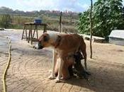 mamá cachorritos buscando familia URGE ACOGIDA!!!! (Málaga)