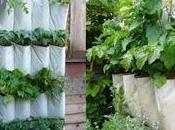 Organizador plantas aromáticas