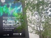 Bosques subacuáticos Lisboa