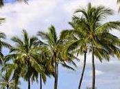 ¿Cuál palmera cultivada mundo?