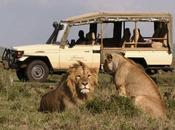 Consejos para realizar safari África