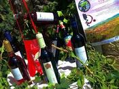 Feria Vinos Historia Covarrubias