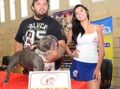 Presentan 2do. Bullfest Luis Potosí