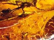 Fósiles: Ambar