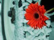 flor admiráis…