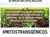 Biofortificación Golden... hablemos Vitamina