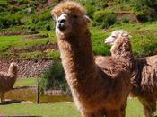 Consejos para visitar Machu Picchu