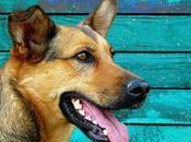 ¿cuál mejor premio para perro?