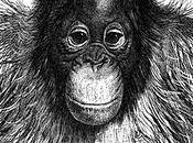 último grito orangután