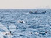 Ballenas, orcas, cachalotes delfines Estrecho