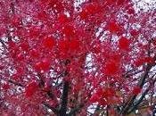 foto día: árboles