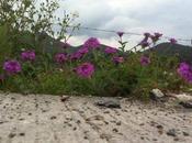 Flores orilla carretera