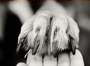Libro Somos Animales