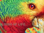 Turner colores vivos casi comen