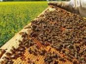 Neonicotinoides provocan daños abejas neonicotinoids cause damage bees.
