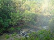 Parque Provincial Yatay creado para preservar ecosistemas misioneros lindantes Cataratas Iguazú.