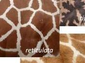 Perfume jirafa