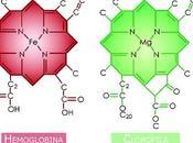 Beneficios clorofila