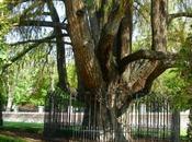'árbol-cañón' Madrid