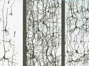 Decline creatividad, plasticidad cerebral poda neuronal