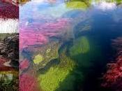 Caño Cristales, colores