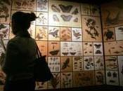 archipiélago ecuatoriano, Darwin encontró principales fundamentos para teoría.