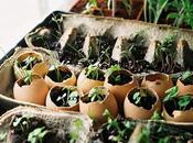 Mini-Garden...(DIY) Sencillo casero