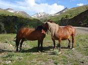 Proyecto trans Pirineos, objetivos, encantaría, pero difícil, track 1000 Pirineo español francés.